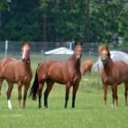 expl_chevaux